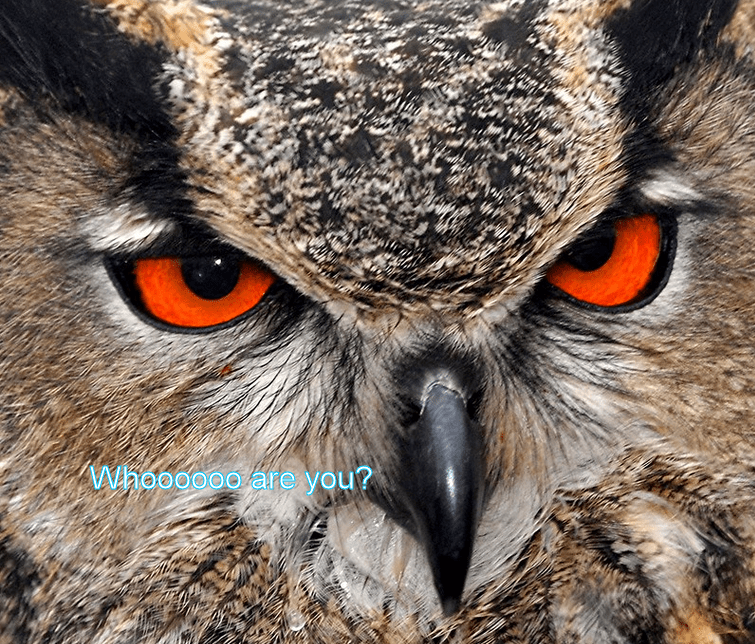 Owl vision
