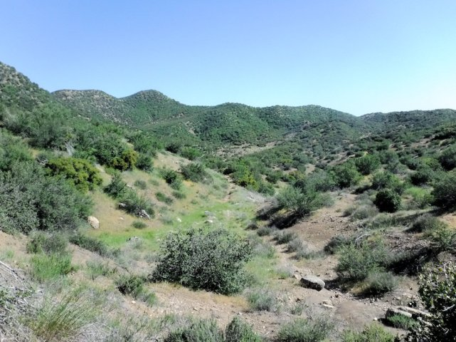 Bucksnort Trail