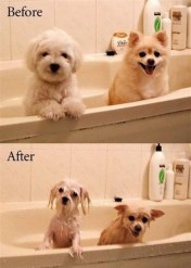 before-after-dogs