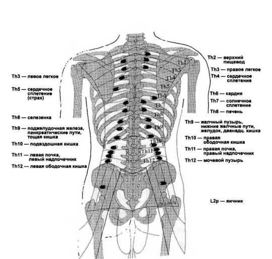 Рис. 27. Задние дермалгии (по Н. Jarricot, 1980)