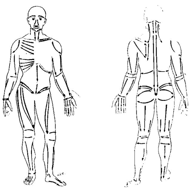 Рис. 44. Схема линий (полос) нейромышечного массажа на передней (слева) и задней (справа) поверхности тела (по R. Perronneaud-Ferre, 1999)