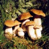 cepes_famille_5