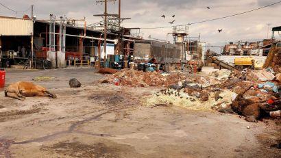 usine d'équarrissage Los Angeles