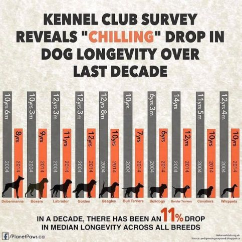 Diminution espérance de vie des chiens