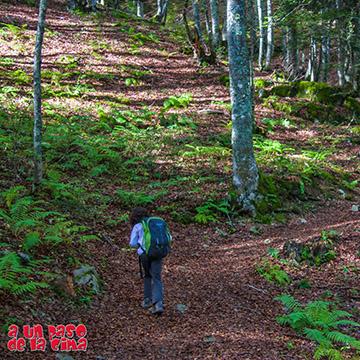 Bosques y Cabañas del Valle de Ossau