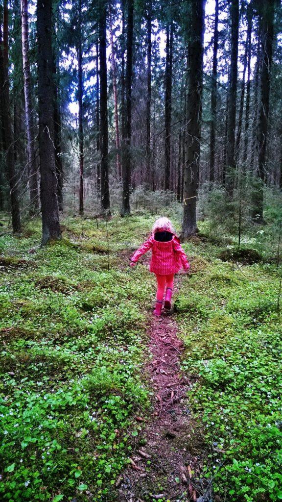 Metsä, luontoon.fi, nature, luonto, vuokramökki