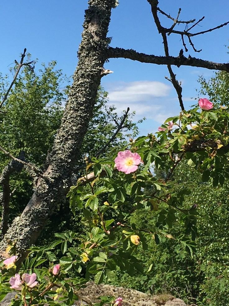 IMG_5547, Vallisaari, luonto, Helsinki, saarihyppely, JT-Line, risteily, Itämeri, nature