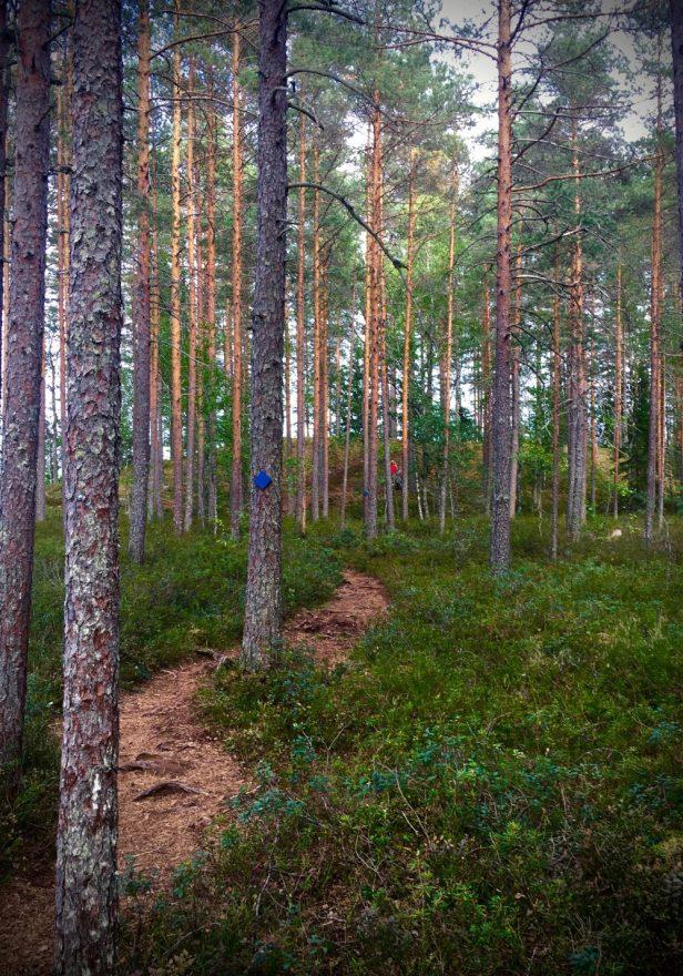 metsä, lapset, Iso-Melkutin, harju