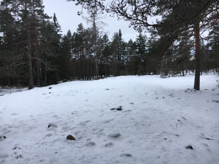Teijon kansallispuisto, visit salo, metsä, retkeily, Jeturkasti