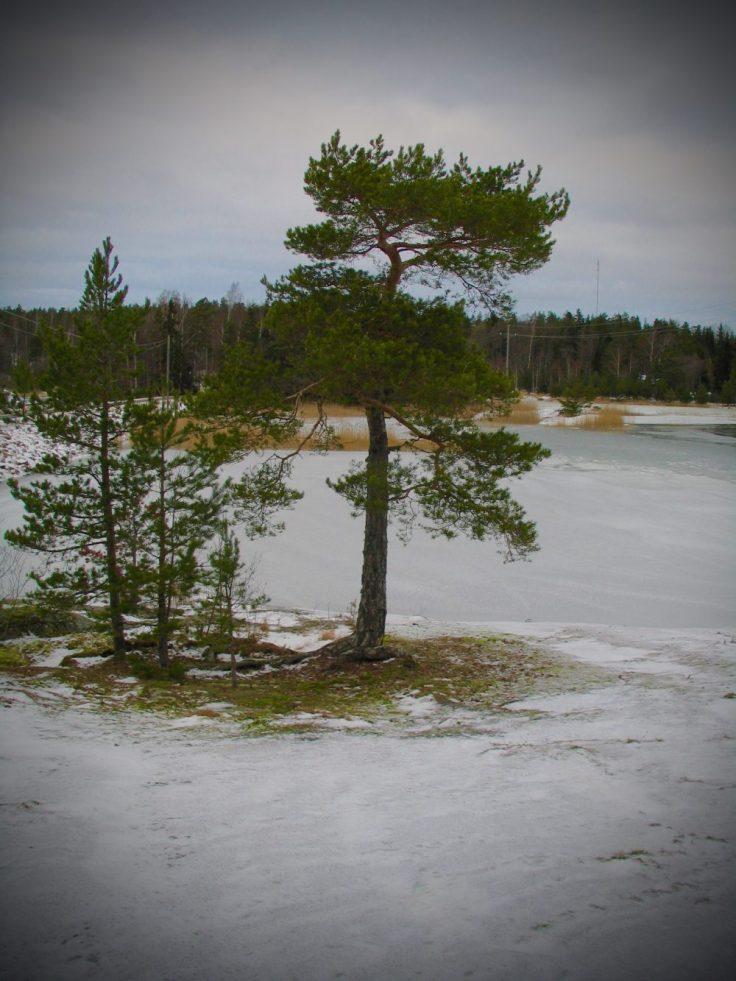 Nixor, Ylöstalo, Visit Salo, Suomen luonto, merinäköala, talvi, Turku, visit Finland
