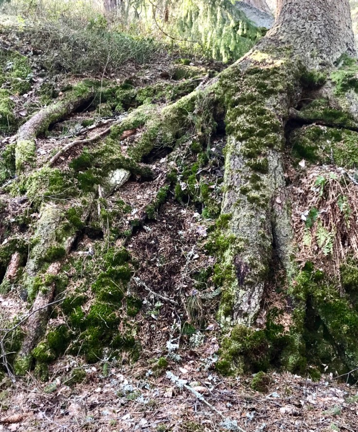 Visit Tuusulanjärvi, luonto, Sarvikallio, kevät