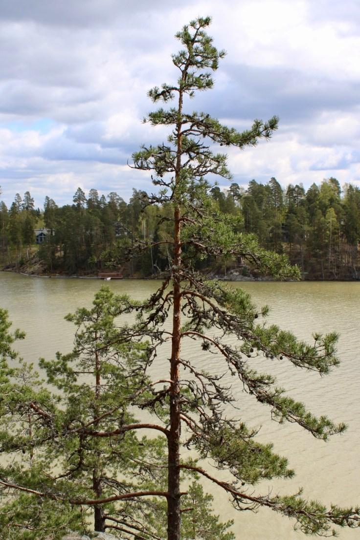 Kansallismaisema, Tuusulanjärvi, Sarvikallio