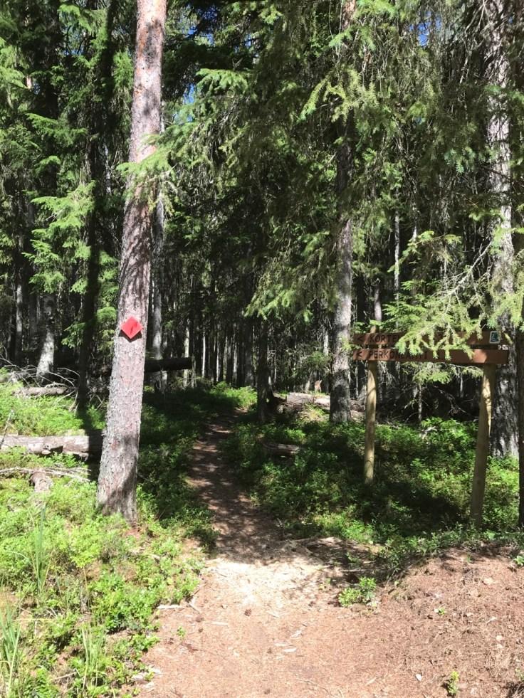 Liesjärven kansallispuisto, Punatulkku