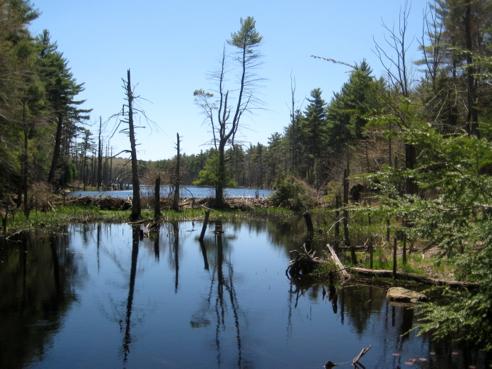 mowry meadow brook