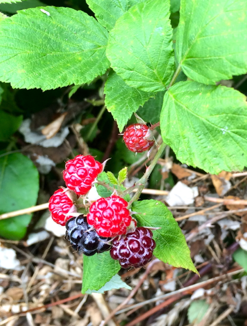 mmm... berries...