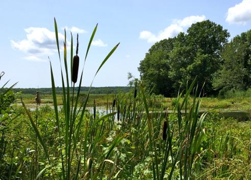 assekonk swamp