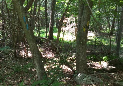 blue-yellow trail split