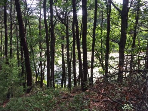 bullhead pond through the trees