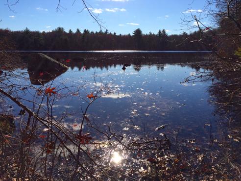 carr pond