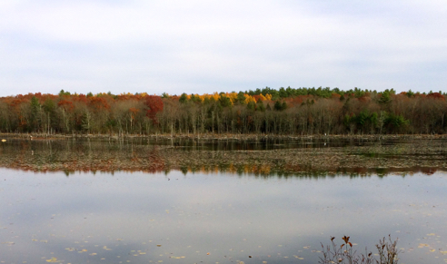 great meadow pond