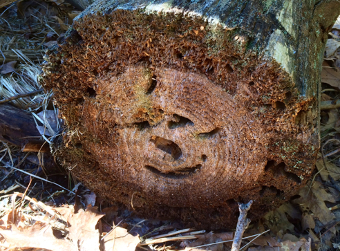 happy stump is happy