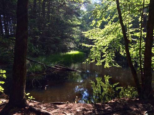 pond above coney brook cascades