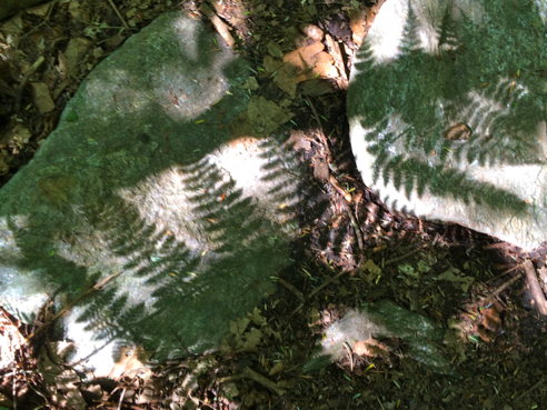 Fern Shadows
