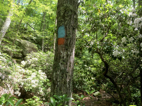 Blue-Orange Trail
