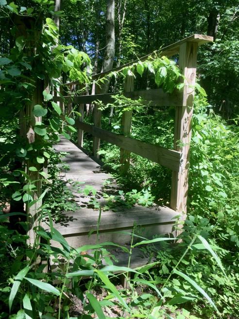 Seldom-used Bridge