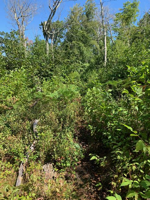 Overgrown!