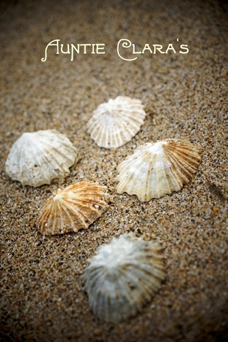 Limpets on the beach