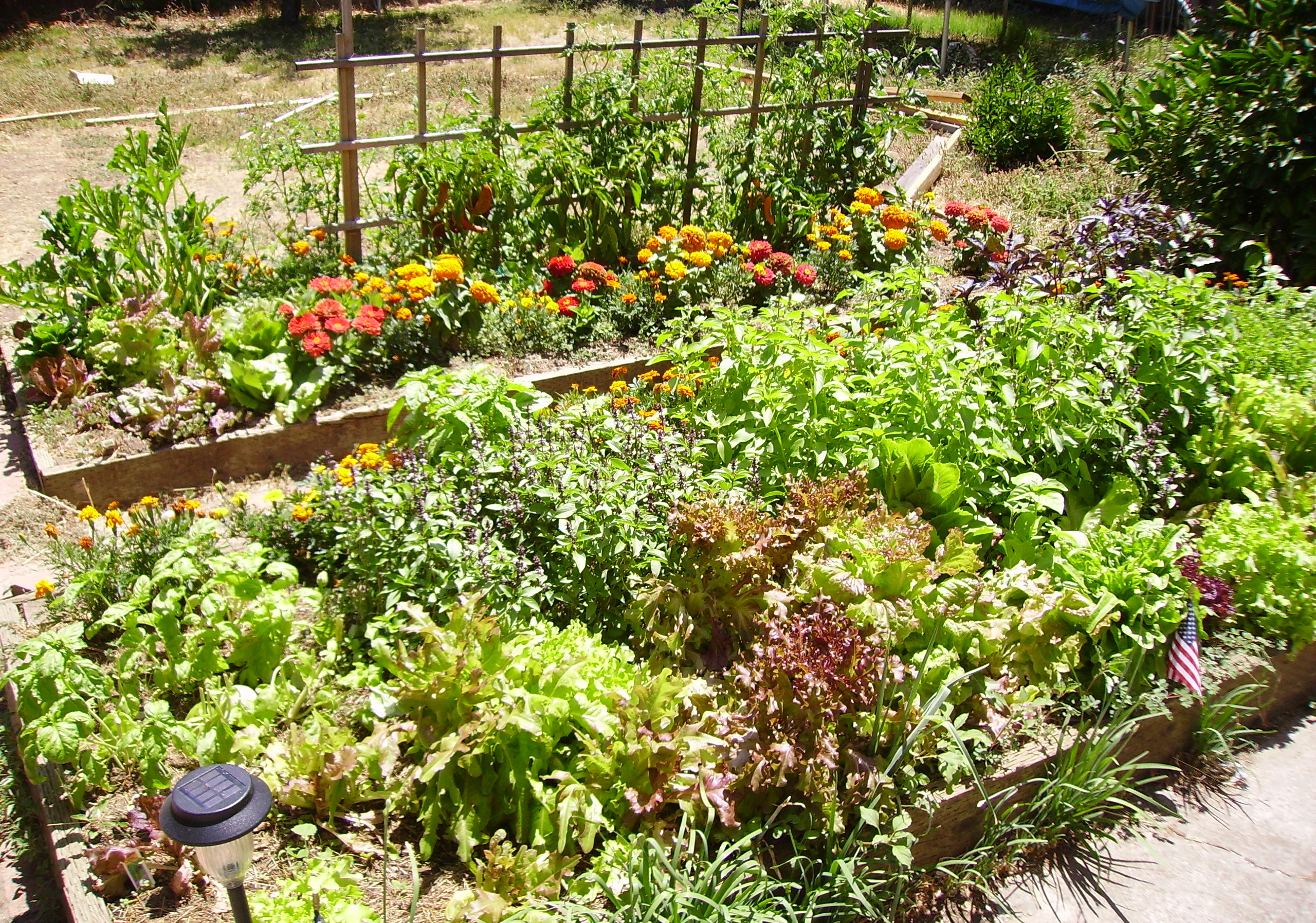 How to  Raised Bed Ideas  Part Two  and why  Auntie Dogmas Garden Spot