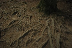 Not enough tree roots on this Trail. Kind of disappointed!