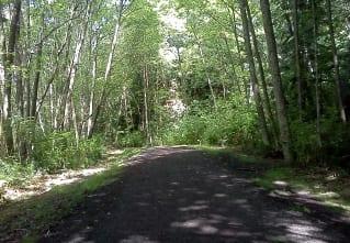 auntie stress forest
