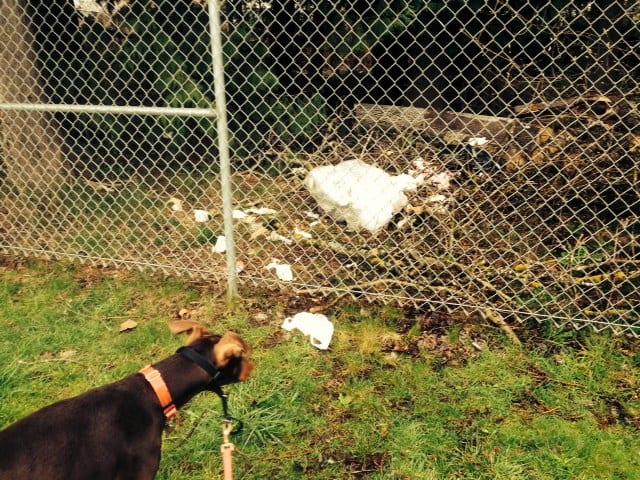 auntie stress garbage in nature