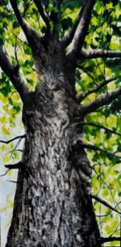 Old Tree Portrait