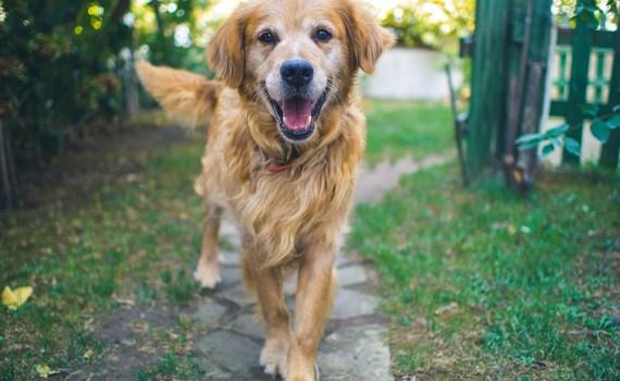 dog-2795963_1920