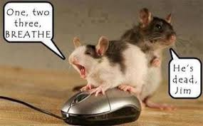 cpr mouse