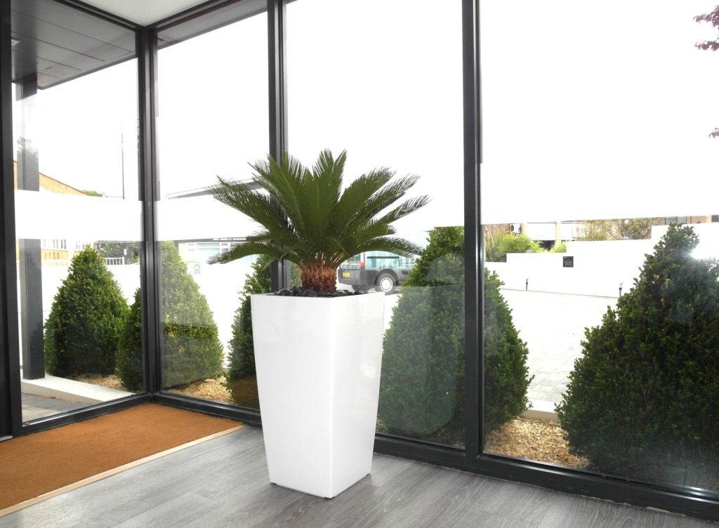 Contemporary Interior Planting  Aureo Group