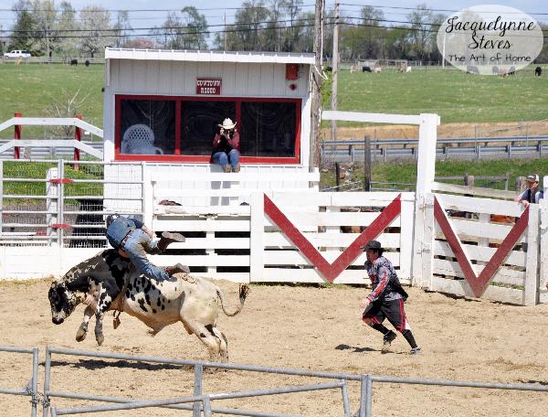 1b-Rodeo-Bull-2-Jacquelynne-Steves