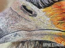 SophieStanding-SecretaryBird3