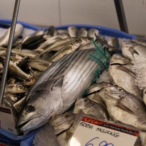 Fyshwick Fresh Food Markets, Fish