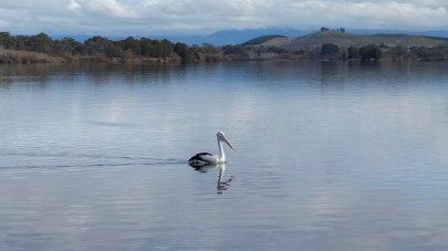 Pelican_Lake_Burley_Griffin