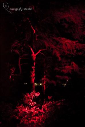 nightfest_026