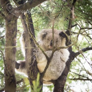 koala_conservation_centre_12