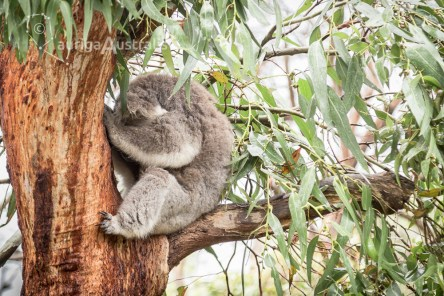 koala_conservation_centre_2
