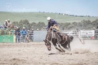 Saddle Bronc_13