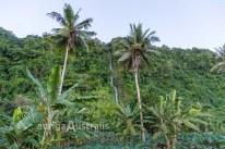 Samoa_Waterfall_1
