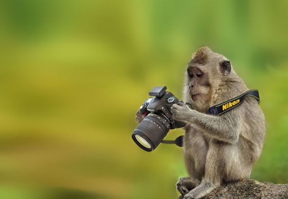 20 facts about me - monkeys - singe - Au'riginalité