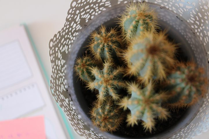 Free Printable • Check list pour publier un article • Blogging • Au'riginalité • Cactus •